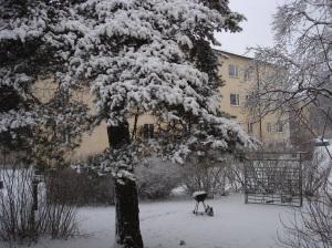 snow bbq